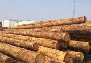 柯诺斯邦集团计划投资建设原木板材加工厂检测台